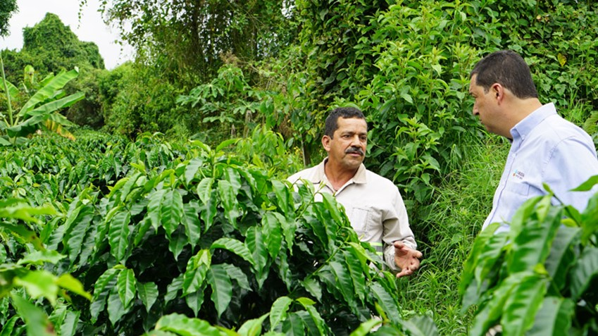 COFCO helps Colombian farmers stay in the business of growing coffee by increasing their productivity and getting better prices for their product.